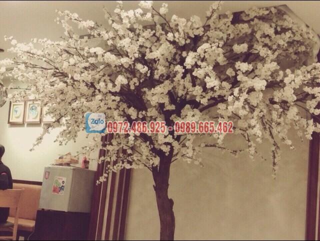 hoa anh dao gia - hoacaygia (16)
