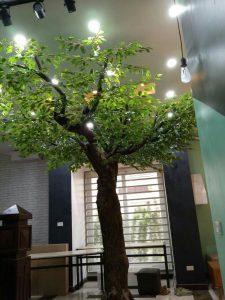 Cây xanh cổ thụ đẹp