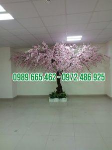 cây hoa anh đào giả