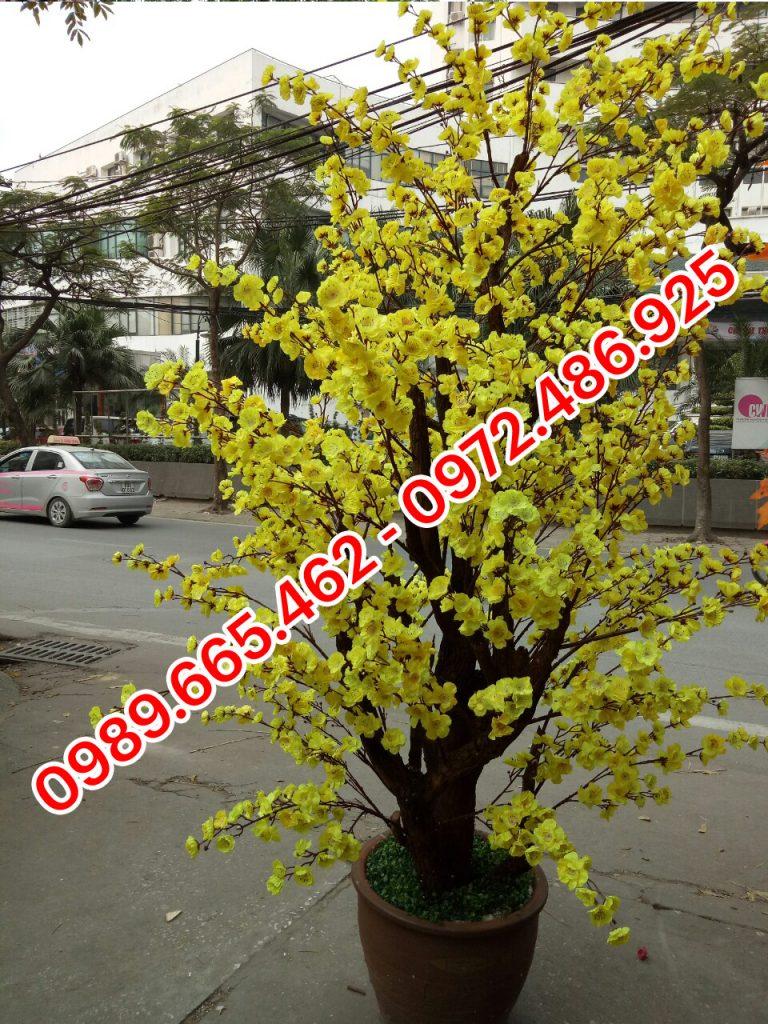 cây mai vàng giả