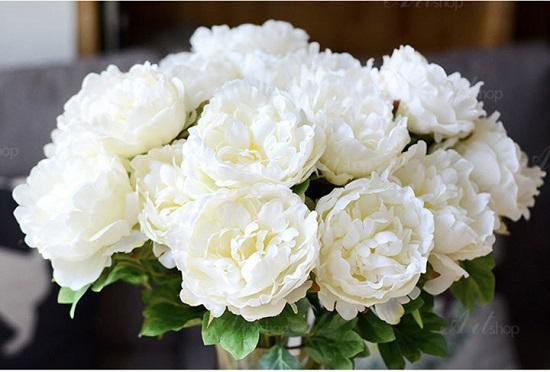 hoa lua gia, hoa phu dung gia