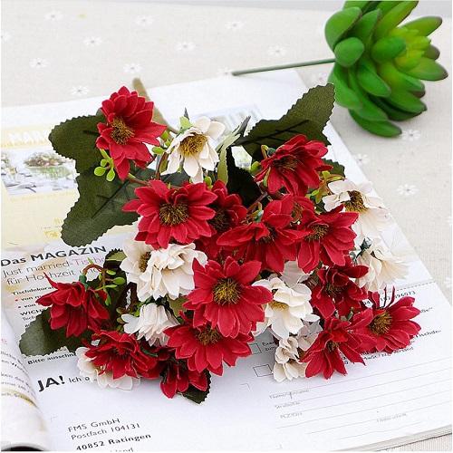 hoa cuc nhí gia