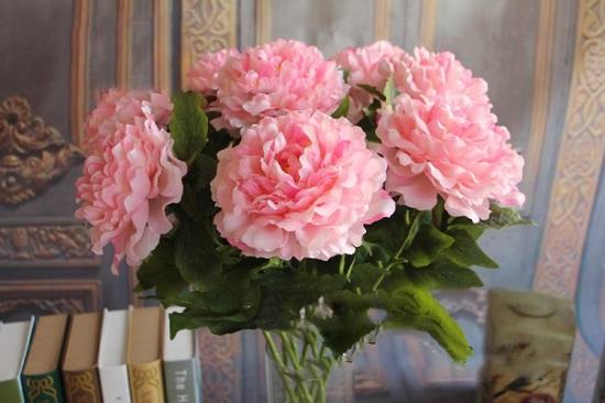 hoa mau don gia
