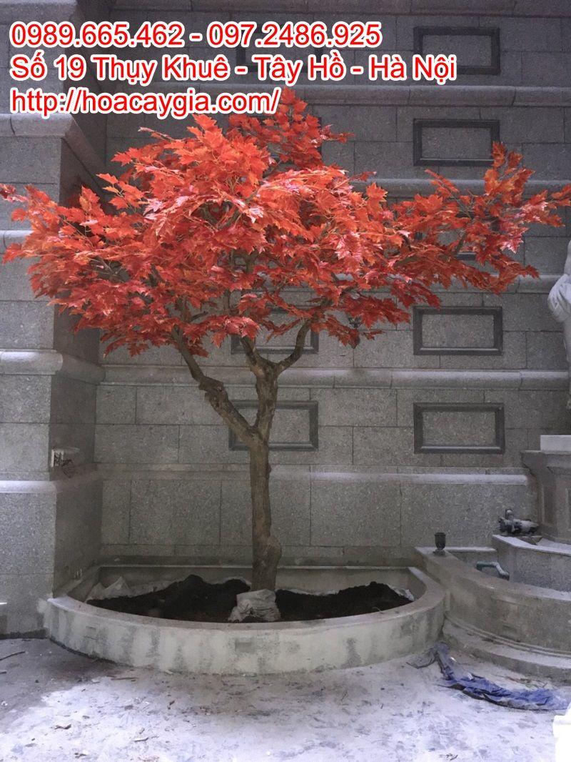 Cây lá đỏ giả